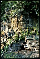 Stone face invaded by vegetation, Angkor Thom complex. Angkor, Cambodia ( color)