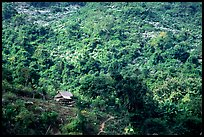 Hillside village in luxuriant jungle. Mekong river, Laos (color)