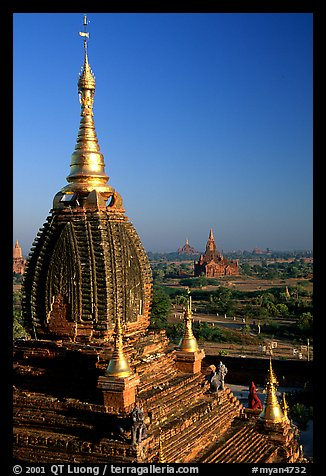 Gilded temples seen from Dhammayazika. Bagan, Myanmar (color)