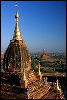 Gilded temples seen from Dhammayazika. Bagan, Myanmar ( color)