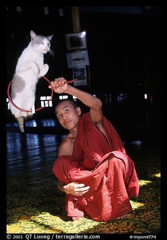 Jumping cat and monk. Inle Lake, Myanmar (color)