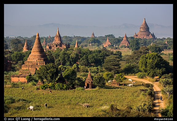 Rural scene with cattle and peasants working in fields below pagodas. Bagan, Myanmar (color)