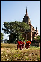 Novices holding red sun umbrellas walk from temple. Bagan, Myanmar ( color)