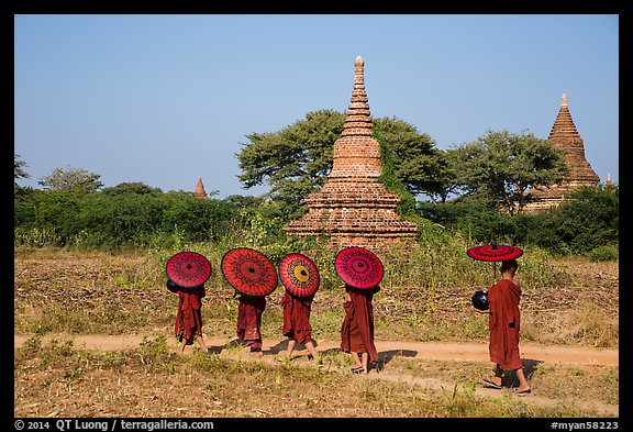 Buddhist Novices with red sun umbrellas on path near old stupas. Bagan, Myanmar (color)