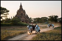 Ox carts and Tayok Pye temple. Bagan, Myanmar ( color)