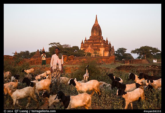 Sheep herder in front of temple, Minnanthu village. Bagan, Myanmar (color)