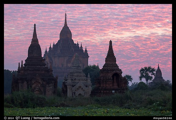 Temples profiled against brilliant sunrise sky. Bagan, Myanmar (color)