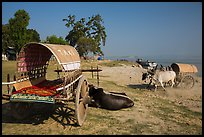 Ox carts on shore of Irrawaddy River, Mingun. Myanmar ( color)