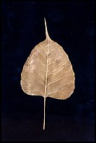 Leaf made of gold. Mandalay, Myanmar ( color)
