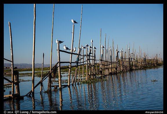 Birds perched on fence. Inle Lake, Myanmar (color)