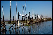 Birds perched on fence. Inle Lake, Myanmar ( color)