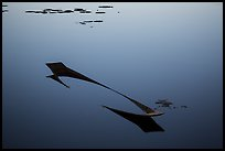 Sunken canoe and aquatic plants in glassy water. Inle Lake, Myanmar ( color)