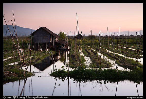 Floating gardens at sunset, Maing Thauk Village. Inle Lake, Myanmar (color)