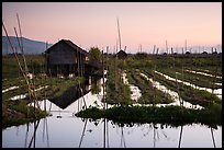 Floating gardens at sunset, Maing Thauk Village. Inle Lake, Myanmar ( color)
