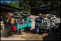 Trucks carrying pilgrims to the top. Kyaiktiyo, Myanmar ( color)
