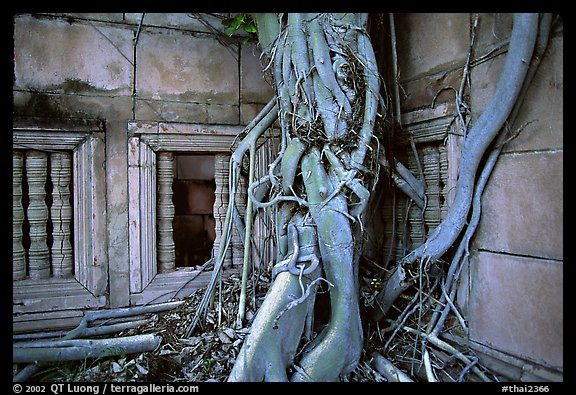 Roots of giant tree and khmer-style temple. Muang Boran, Thailand (color)