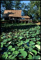 Stilt house on lotus pond. Muang Boran, Thailand (color)