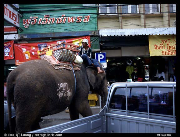 Elephant Parking. Lopburi, Thailand