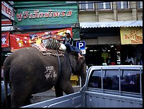 Elephant Parking. Lopburi, Thailand (color)