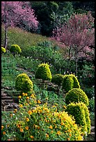 Flower garden in Hmong village. Chiang Mai, Thailand (color)