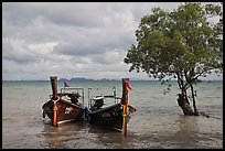 Boats and mangrove tree, Ao Railay East. Krabi Province, Thailand (color)