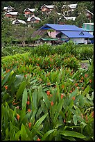Tropical flowers and hillside houses, Ko Phi Phi. Krabi Province, Thailand