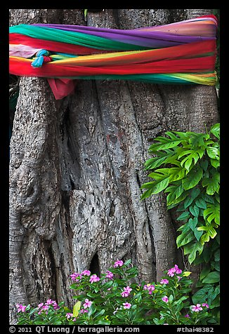 Detail of sacred banyan tree with ribbons, Ko Phi-Phi island. Krabi Province, Thailand (color)
