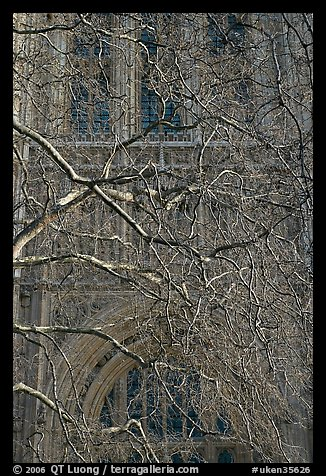 Bare branches and palace of Westminster facade. London, England, United Kingdom (color)