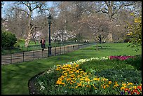 Businessman walking in  Saint James Park amongst flowers. London, England, United Kingdom (color)