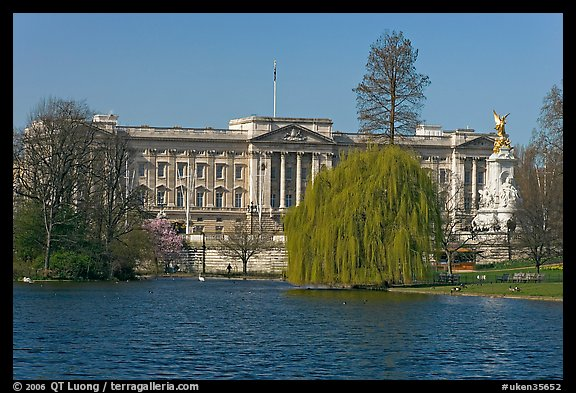 Buckingham Palace and lake, Weeping Willow (salix babylonica),  Saint James Park. London, England, United Kingdom (color)