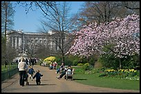 Pathway in Saint James Park in spring with Buckingham Palace in the background. London, England, United Kingdom
