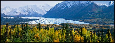 Autumn landscape with glacier. Alaska, USA (Panoramic color)
