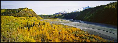 Wide valley with aspen in autumn colors. Alaska, USA (Panoramic color)