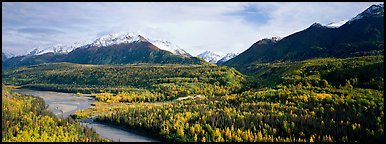 Autumn landscape with river, aspen forest, and snowy mountains. Alaska, USA (Panoramic color)