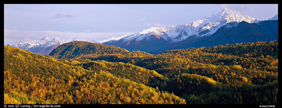 Fall mountain landscape with aspens and snowy peaks. Alaska, USA (color)