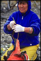 Inupiaq Eskimo woman getting fish ready to hang for drying, Ambler. North Western Alaska, USA ( color)