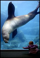Northern Sea Lion checking out baby, Alaska Sealife center. Seward, Alaska, USA (color)