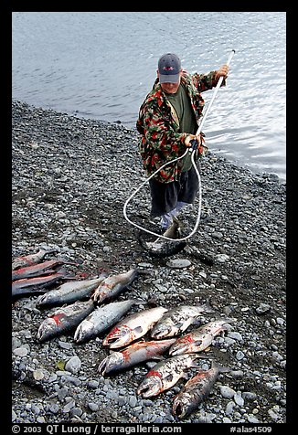 Fisherman laying out on shore salmon. Homer, Alaska, USA (color)