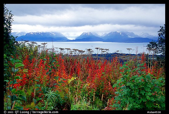 Ketchemak Bay and Kenai Mountains with a foreground of autunm grasses. Homer, Alaska, USA (color)