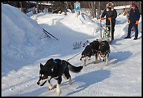 Dog mushing from parking lot. Wiseman, Alaska, USA ( color)