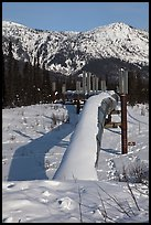 Snow-covered Alaska Oil Pipeline. Alaska, USA (color)
