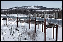 Trans Alaska Pipeline in winter. Alaska, USA ( color)