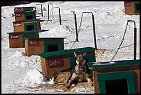 Row of doghouses with dogs names. North Pole, Alaska, USA (color)