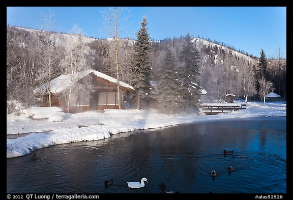 Cabins with swans and ducks in winter. Chena Hot Springs, Alaska, USA (color)