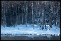 Stream and forest in winter. Chena Hot Springs, Alaska, USA ( color)