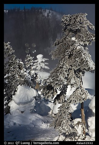 Trees and steam in winter. Chena Hot Springs, Alaska, USA (color)
