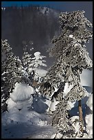 Trees and steam in winter. Chena Hot Springs, Alaska, USA ( color)