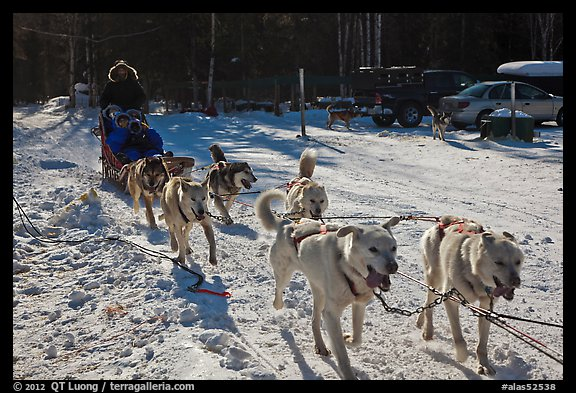 Recreational dog mushing. Chena Hot Springs, Alaska, USA