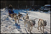 Recreational dog mushing. Chena Hot Springs, Alaska, USA (color)