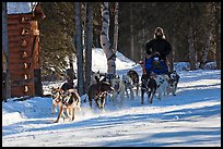 Dog mushing. Chena Hot Springs, Alaska, USA ( color)